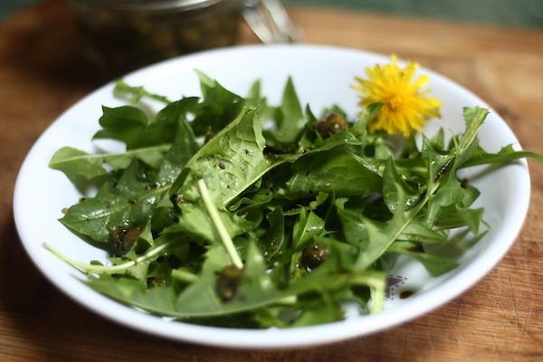 salade pissenlit
