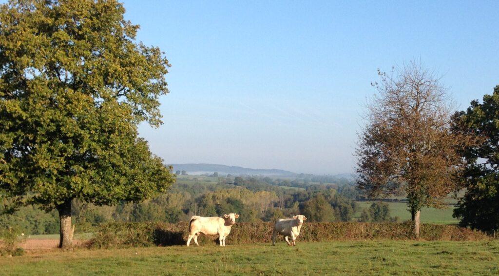 Bourgogne Charolais