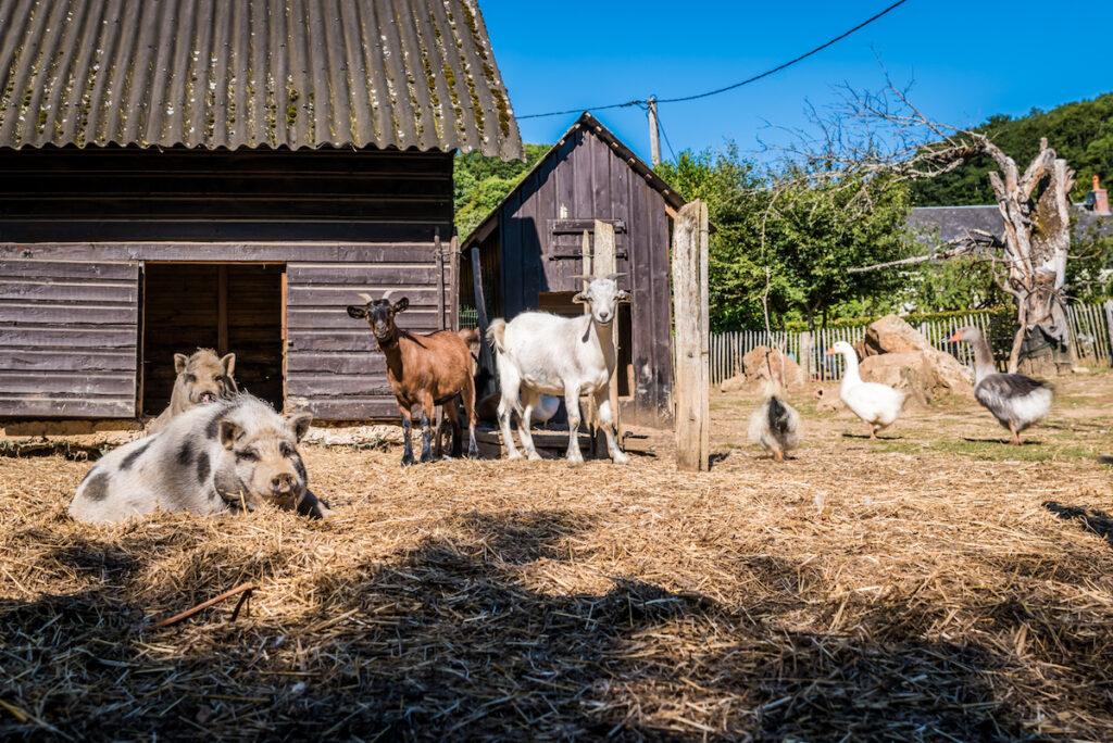 kinderboerderij-morvan-rustique-koop