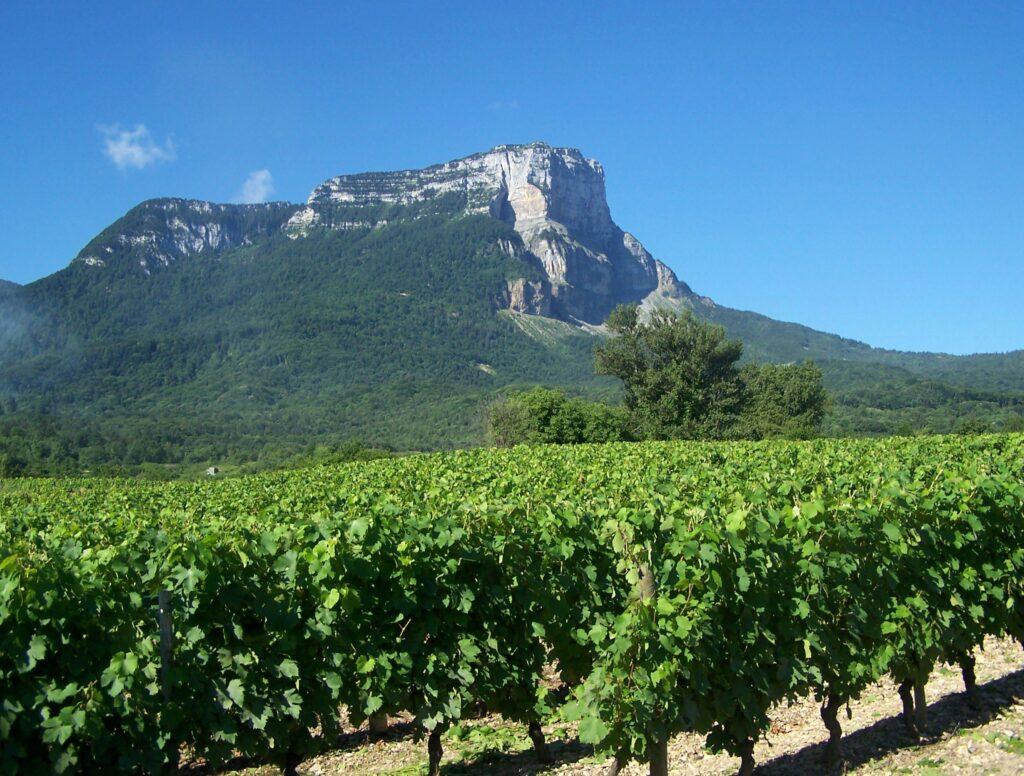 Savoie Mont Blanc wijngaarden