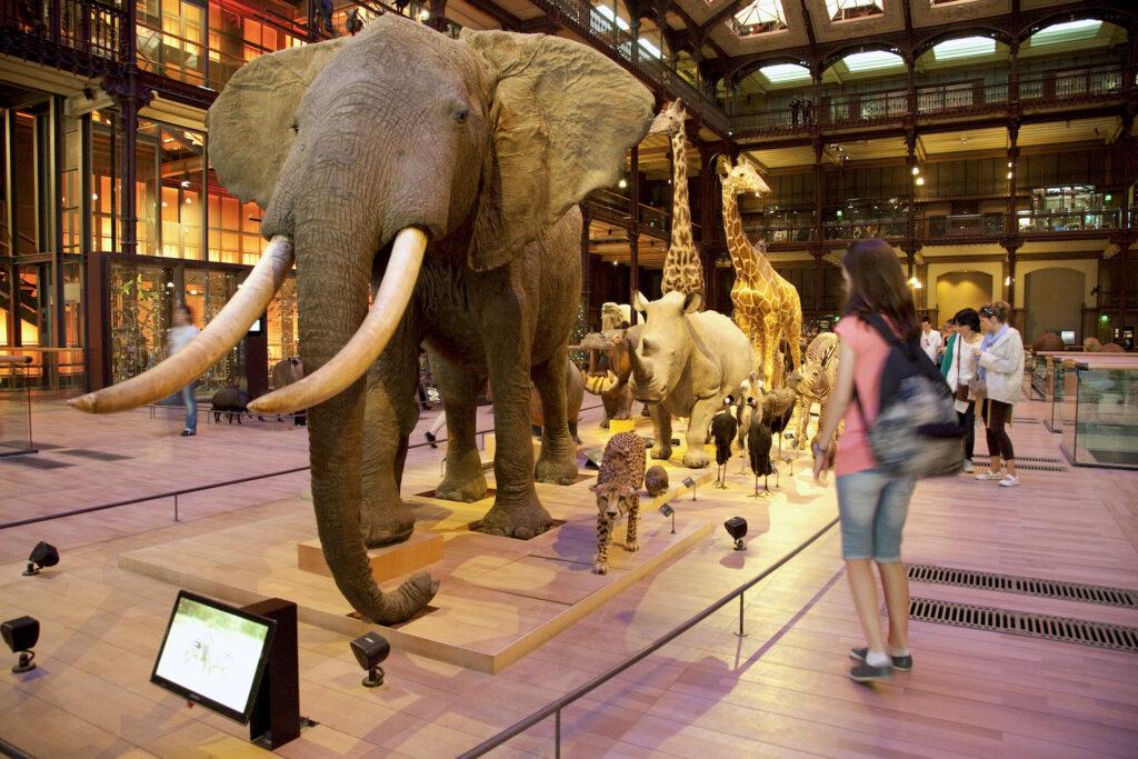 Galerie de l'évolution musée histoire naturelle parijs