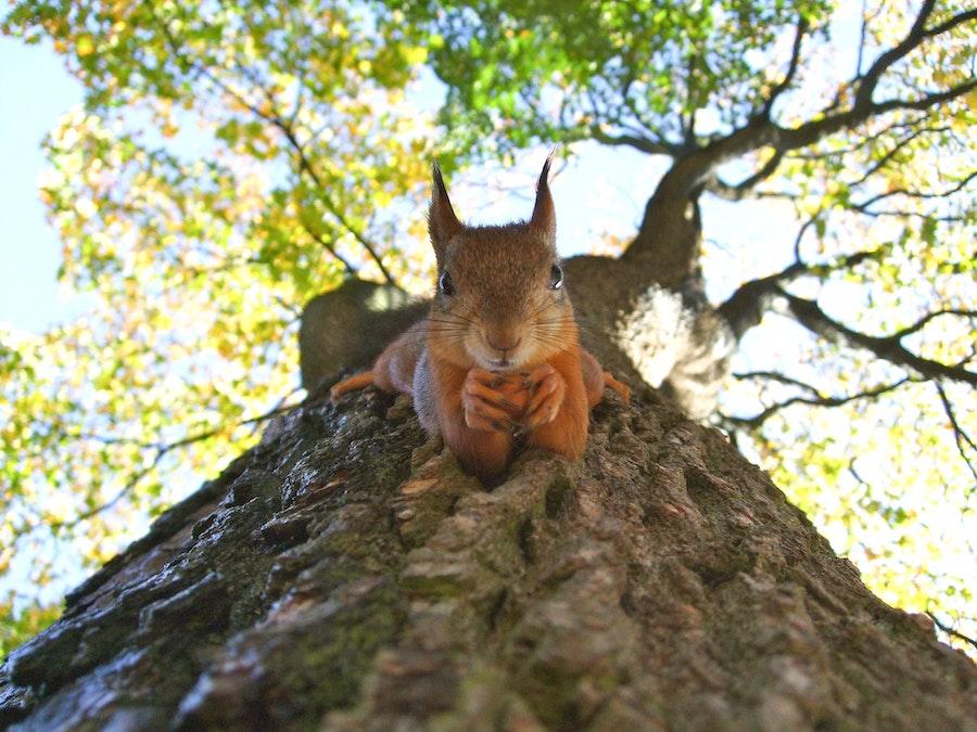 eekhoorn dierenuitdrukkingen in het Frans